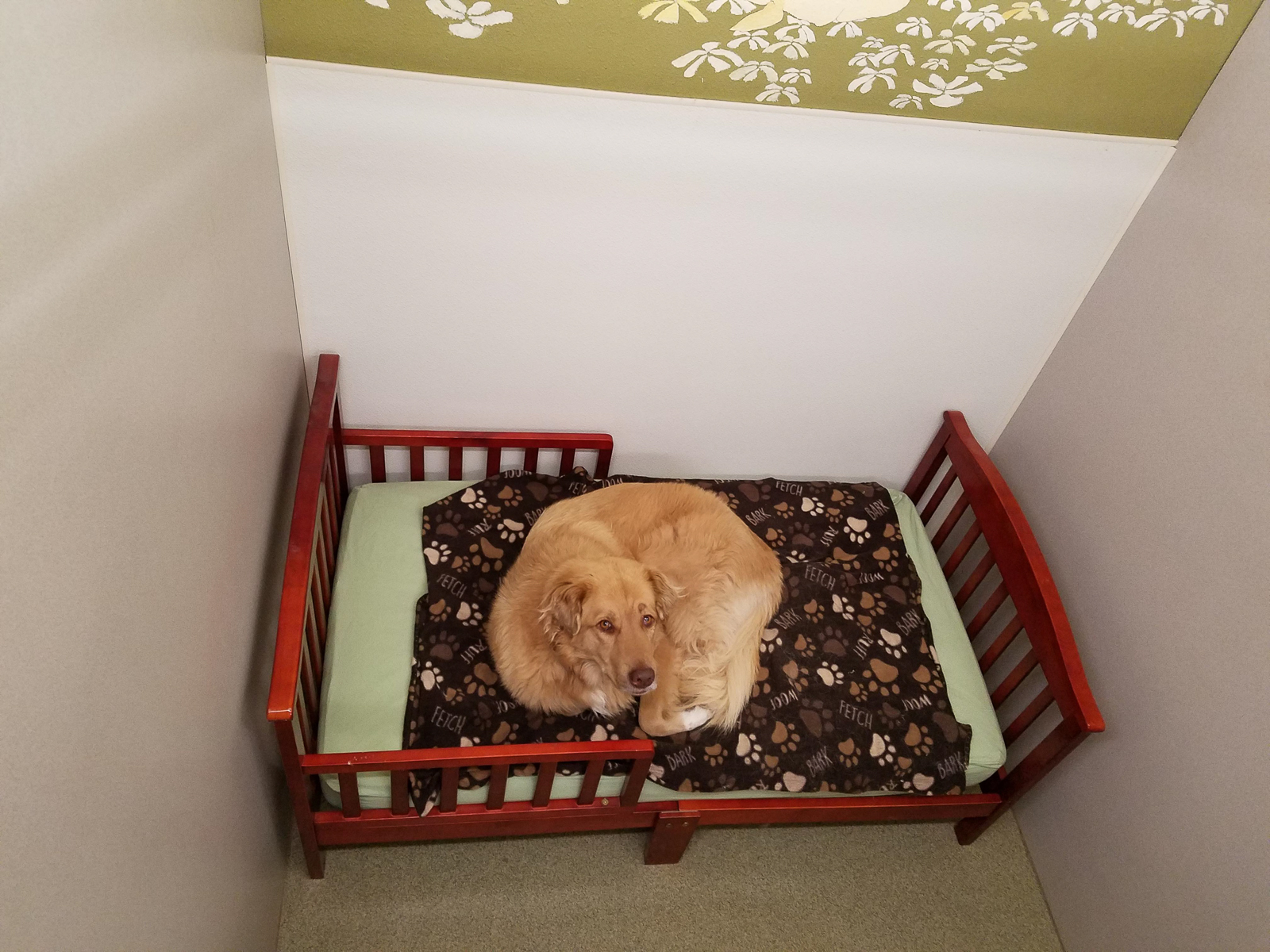 Where your Pets Come to Play and Stay - Welcome